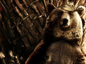 joffrey_bear